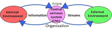 NervousSystem C